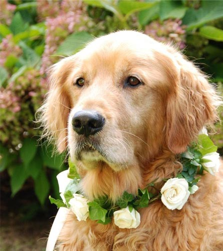 wedding day dog with flowers